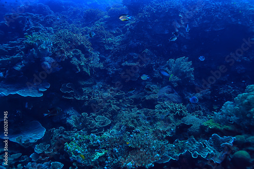Poster Coral reefs coral reef underwater / sea coral lagoon, ocean ecosystem
