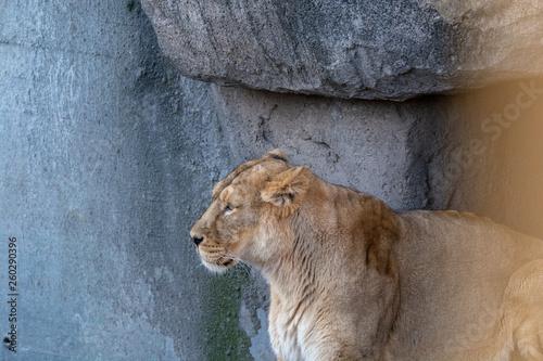 Fototapety, obrazy: Zootiere Aalborg, Dänemark