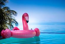 Rosa Flamingo Im Pool Wasser Infinitie Aussicht Horizont Palme
