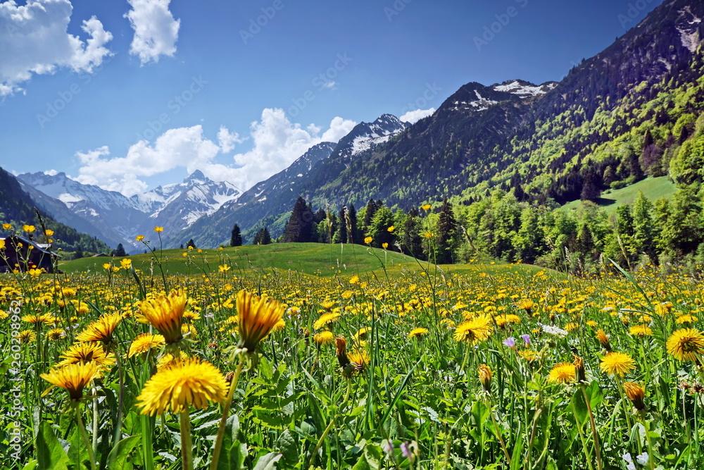 Fototapeta Blumenwiese und Berge in den Alpen