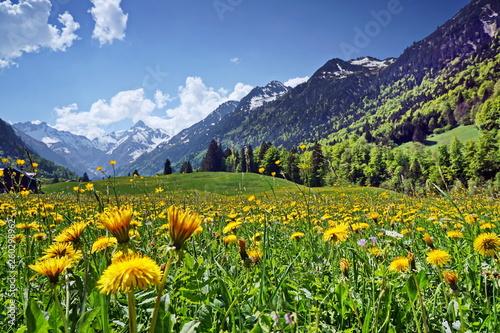 Blumenwiese und Berge in den Alpen - 260298962
