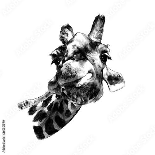 Photo  giraffe head funny expression muzzle funny, sketch vector graphics monochrome il