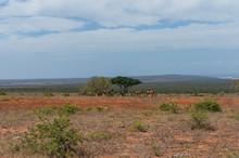 African Landscape With Herd Of Wild Red Hartebeest Grazing