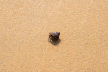 Hermit Crabs That Are Running On The Sand.