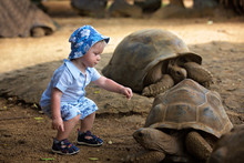 Happy Family, Children And Parents, Feeding Giant Tortoises In A Exotic Park On Mauritius Island