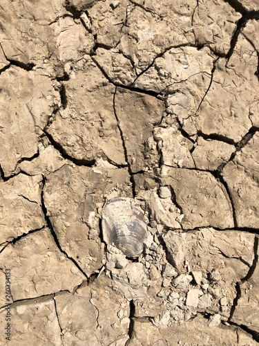 Fotografie, Obraz  Dry cracked clay surface of the earth