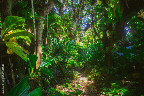 Photo bosque tropical