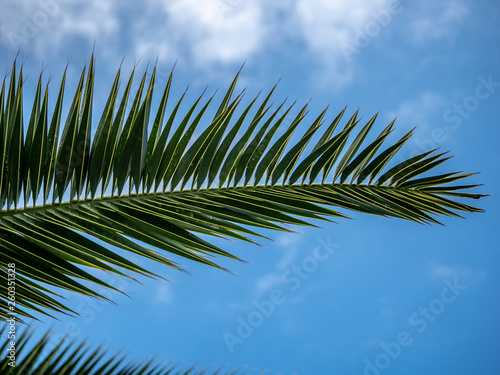 Foto  Creative shot of a palm frond under the sky