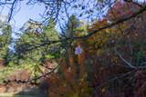 Fototapeta Na ścianę - autumn in the forest