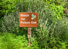 Watch For Poison Oak Sign In The Middle Of A Variety Of Green Vegetation Along A Walking Trail.