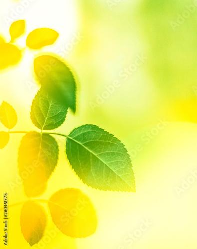 Foto auf Leinwand Gelb Fresh green leaves in spring