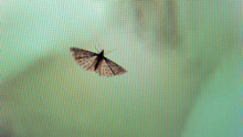 Fly On A Screen