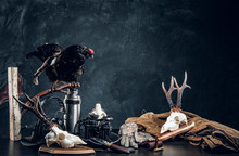 Hunters Equipment And Trophys On A Table. Studio Photo Against A Dark Wall Background