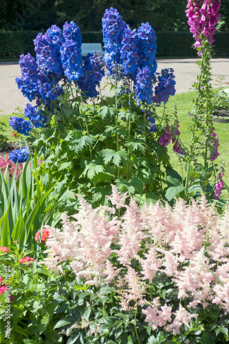 Blooming delphinium in the park. Fototapet