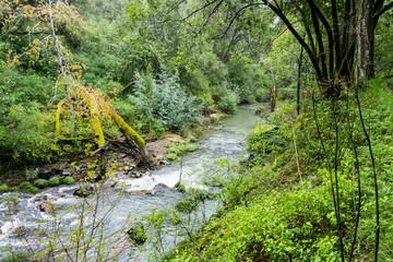Fototapeta na wymiar Creek flowing through a lush green forest, Jasper Ridge Biological Preserve, San Francisco bay area, California