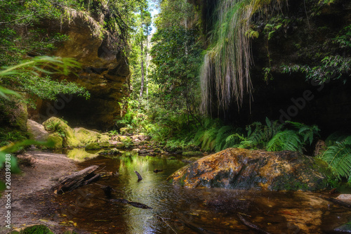 Wall Murals Forest river Grand Canyon Walking Track