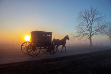 Amish Horse And Buggy With Misty Sunrise