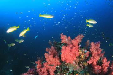 Fototapeta na wymiar Coral reef and fish in Indian Ocean