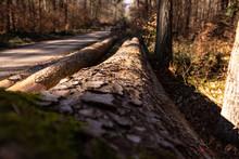 Abgeholzte Baumstämme Liegen ...