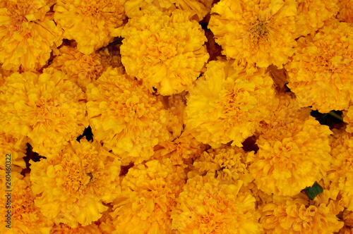 Photo  Pile of yellow marigold flowers.