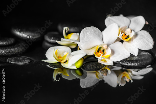 Fotobehang Orchidee spa concept of white orchid (phalaenopsis) and black zen stones with drops on water with reflection