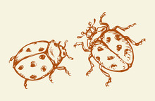 Ladybug. Vector Drawing