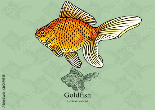 Slika na platnu Gold Fish, Fantail Gold Fish