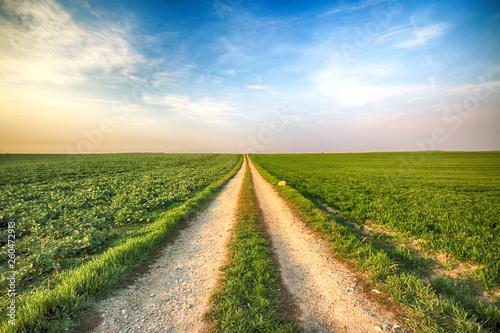 Fotografía  A dirt road among green fields.