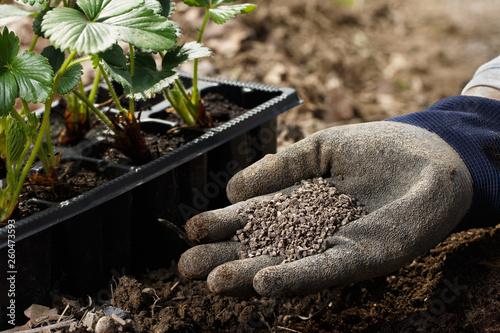 Valokuvatapetti Gardener blending organic fertilizer humic granules with soil, enriching soil