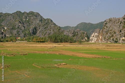 Fototapeta Rice fields in North Vietnam obraz na płótnie