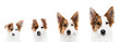 canvas print picture - Panorama, Hund zeigt Wachstum oder Wachstumsphase, von Welpe bis ausgewachsen