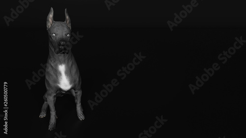 Slight High Angle View Of Great Dane Dog Sitting 3d Render