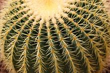 Closeup Image Of Golden Barrel...