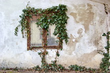 Window Of Old House Overgrown With Ivy