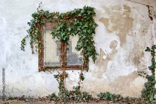 Fotomural window of old house overgrown with ivy