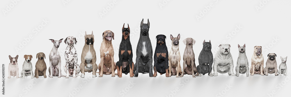 Fototapety, obrazy: Several Dogs with different breeds  lined up white background front view 3d render
