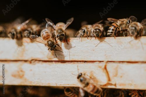 Recess Fitting Bee bienen