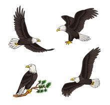 Set Of Bald Eagles - Vector Illustration