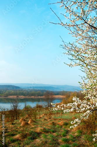 Foto op Plexiglas China Blooming trees on a mountain lake in the open air against the background of the forest and mountains