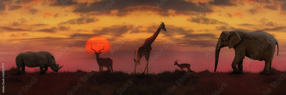 Fototapety, obrazy: African sunset panoramic background
