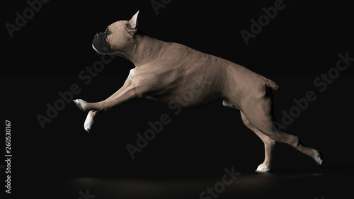Boxer Dog Is Galloping Side View 3d Render Buy This Stock