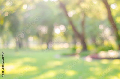 Foto auf AluDibond Gelb Schwefelsäure abstract bio green blur nature background trees lush foliage in the park at morning with sunlight.