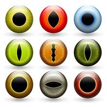 Different Animals Eyes Set