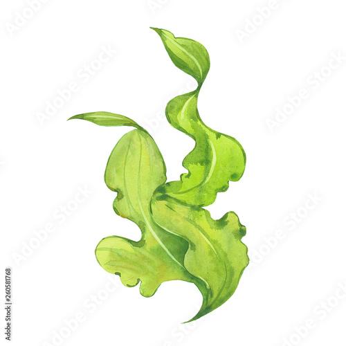 watercolor green seaweed Canvas Print