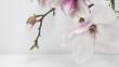 canvas print picture - Wunderschöne blühende Magnolien - Magnolienzweig