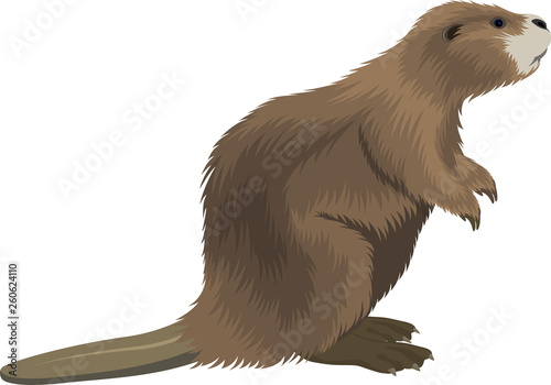 Photo vector beaver illustration