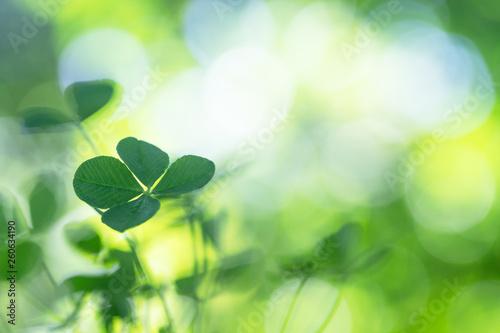 Photo  四つ葉のクローバー