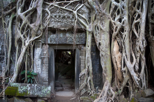 Photo  Ta Prohm Temple ( Siem Reap region, Cambodia)