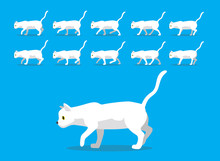 Animal Animation Sequence White Cat Cartoon Vector