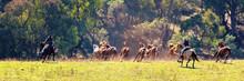 Cowboys Herding Wild Horses In...